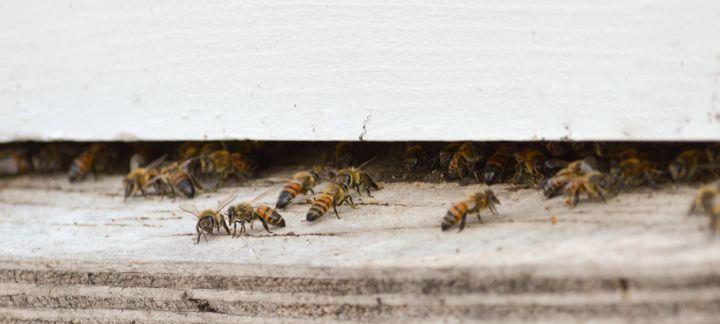 Girl Talk outside the Hive - Jennifer Wallace