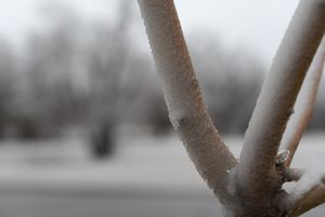 Winter Tree Frost