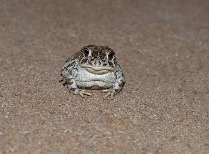 Baby toad - Jennifer Wallace
