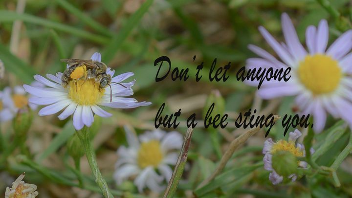 Don't let anyone but a bee sting you - Jennifer Wallace