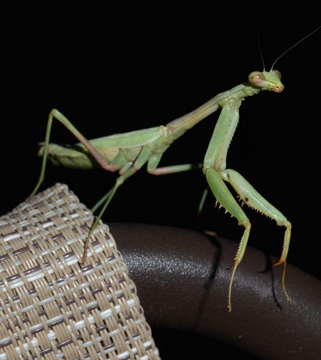 The good luck bug - Jennifer Wallace