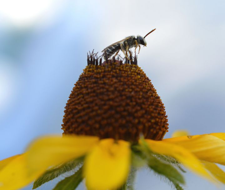 Wasp on sunflower - Jennifer Wallace