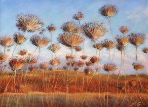 Field of dried flowers