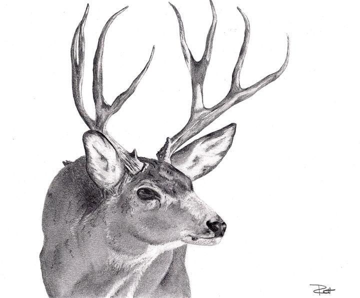 Buck Sketch - Wicked Wallow Designs