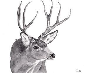 Buck Sketch
