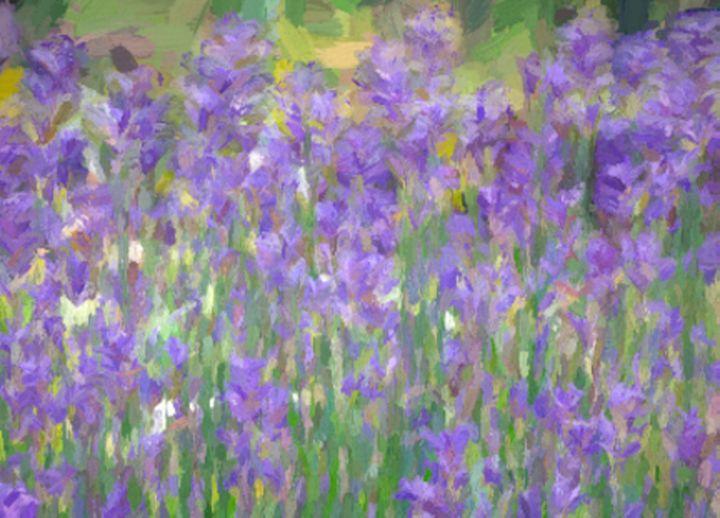 Lavender Impression - Lynn Bolt Lochside Photos