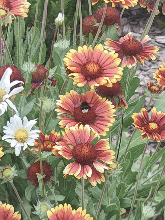 Colourful Flowers - Lynn Bolt Lochside Photos