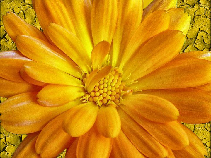 Marigold - Lynn Bolt Lochside Photos