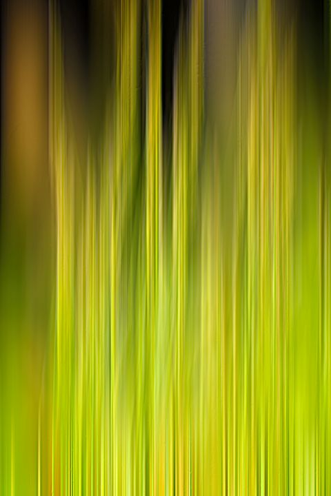 Abstract Grass - Lynn Bolt Lochside Photos