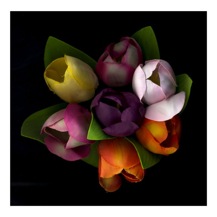 BOUQUET OF TULIPS - Nature, Divine Proportion, Still Life