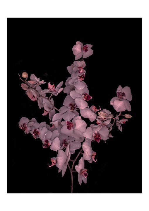 orchid bouquet - Nature, Divine Proportion, Still Life