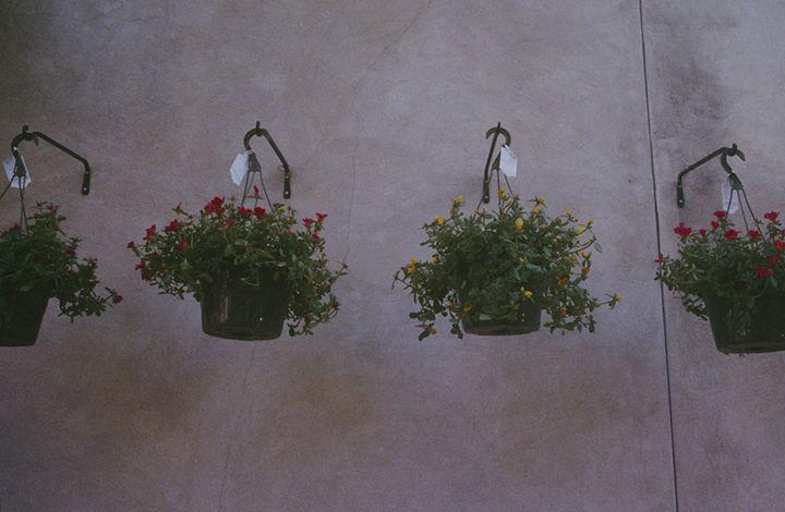 flowers - Aubrey Carpenter