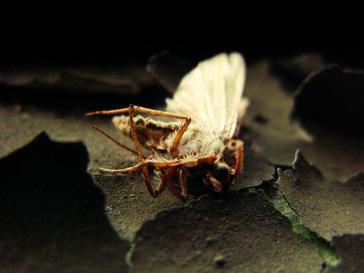 Where Moth and  Rust Doth Consume - Jared Davison Photography