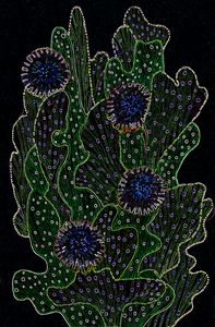 Blooming Cactus Black and Neon