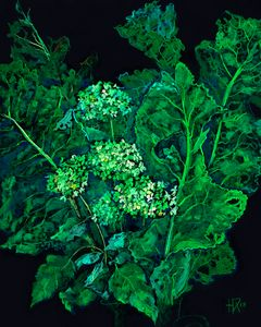 Hydrangea and Horseradish, Floral Ar