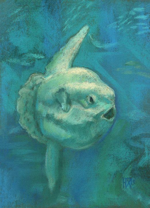 Sunfish / Mola Mola - ClipsoCallipso
