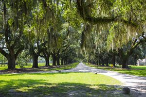 Entrance to Boone Plantation