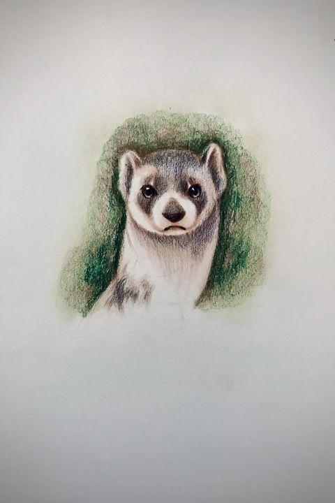Drawing - Ferret - Outschool Demo Works