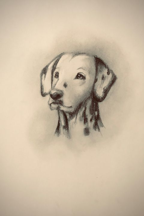 Sketching - Dalmation - Outschool Demo Works