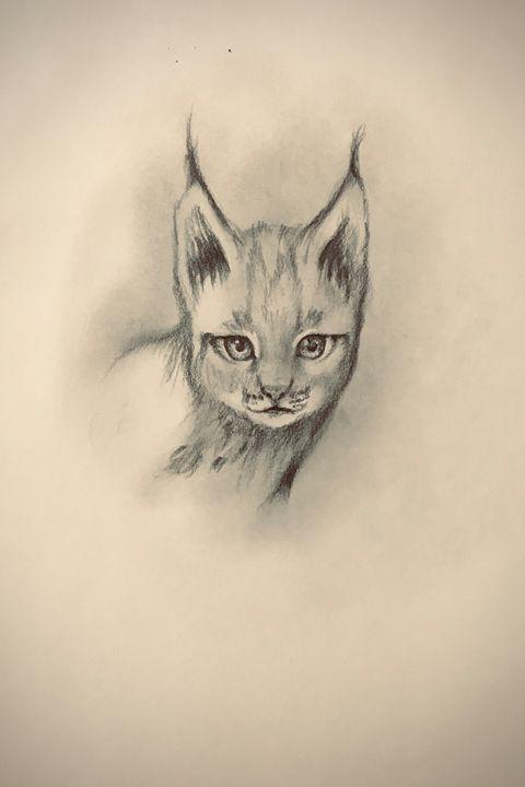 Sketching - Lynx (Eurasian) - Outschool Demo Works