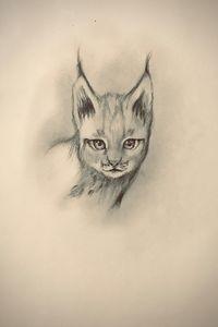 Sketching - Lynx (Eurasian)