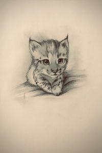 Sketching - Lynx (Iberian)