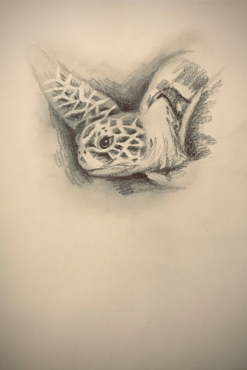 Sketching - Turtle - Online Lesson Demo Works