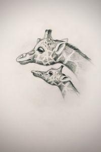 Sketching - Giraffe