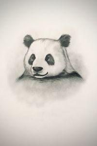 Sketching - Panda