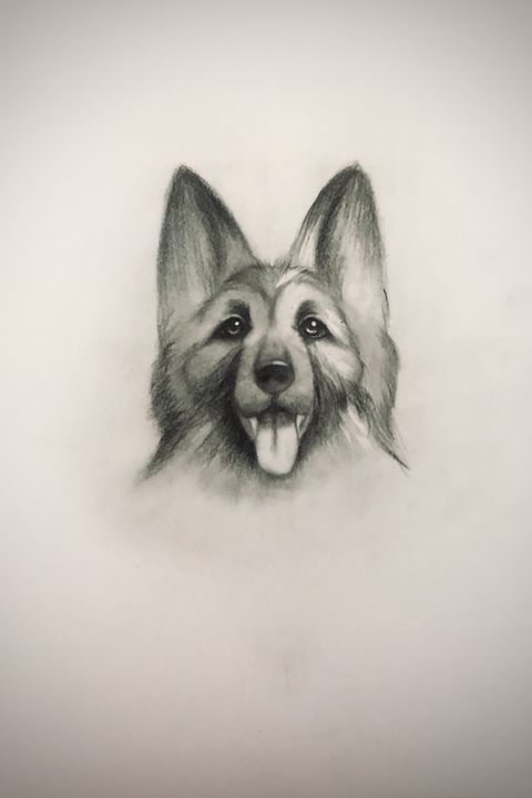 Sketching - King Shepherd - Online Lesson Demo Works
