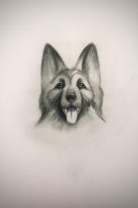Sketching - King Shepherd