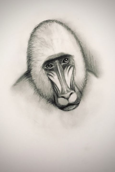 Sketching - Mandrill - Online Lesson Demo Works