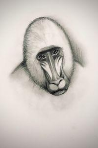 Sketching - Mandrill