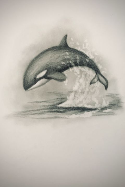 Sketching - Orca - Online Lesson Demo Works