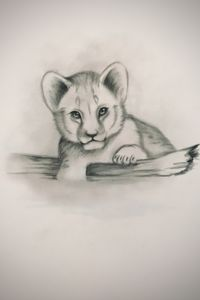 Sketching - Baby African Lion