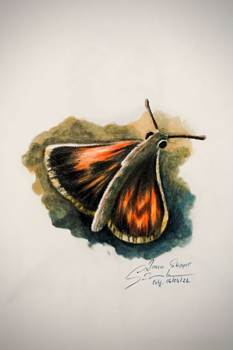Drawing - Draco Skipper - Online Lesson Demo Works