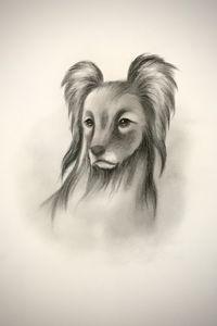 Sketching - Pyrenean Sheepdog