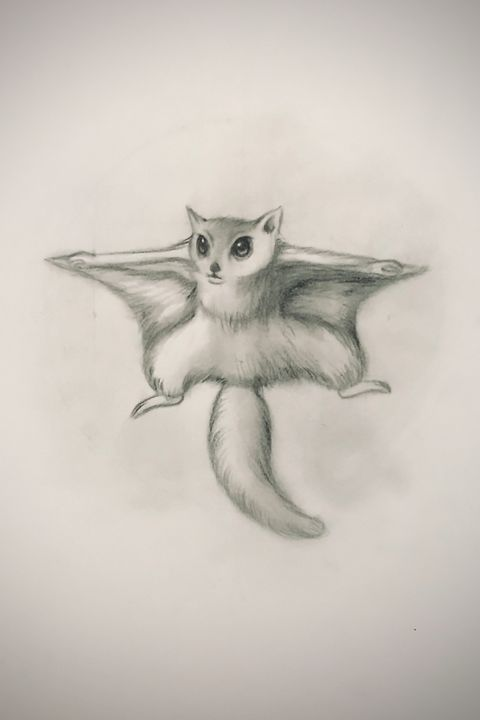 Sketching - Flying Squirrel - Online Lesson Demo Works