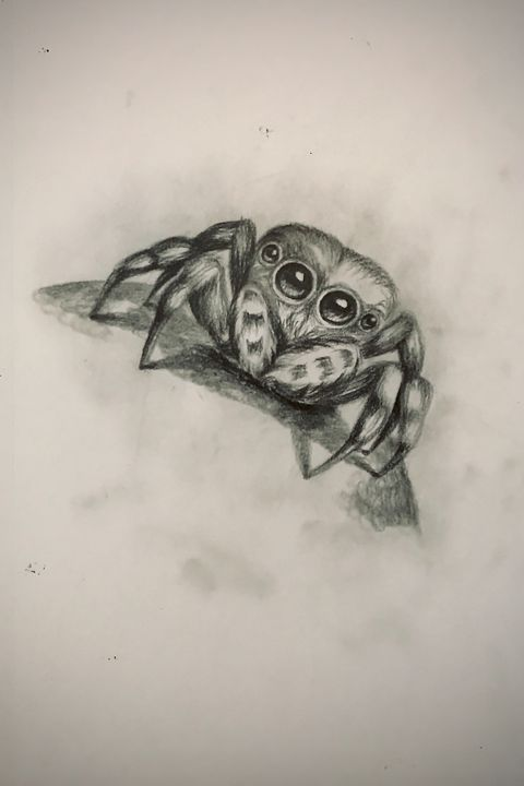 Sketching - Jumping Spider - Online Lesson Demo Works