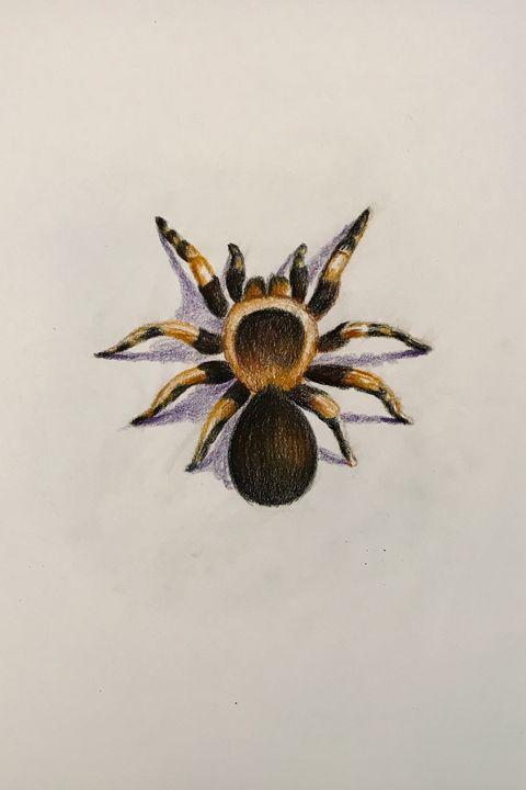 Drawing - Tarantula - Online Lesson Demo Works