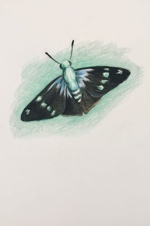 Drawing - Butterfly (Flashing Astra) - Online Lesson Demo Works