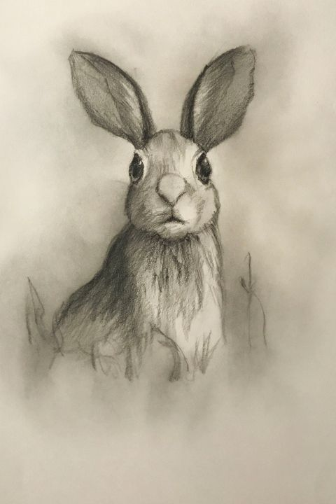 Sketching - Bunny #1 - Outschool Demo Works