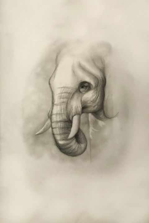 Sketching - Elephant - Outschool Demo Works