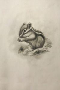 Sketching - Chipmunk