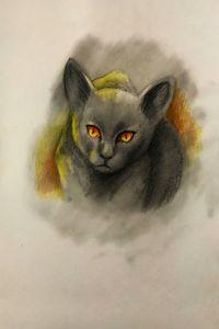Halloween - Cat