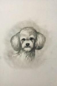 Sketching - Poodle