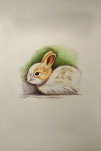 Drawing - Bunny
