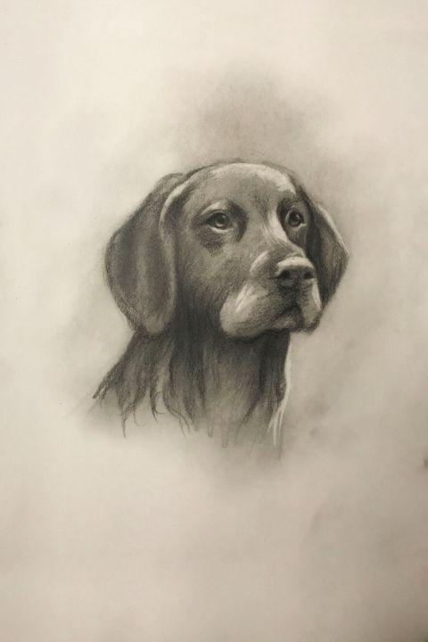 Sketching - Black Labrador Retriever - Online Lesson Demo Works
