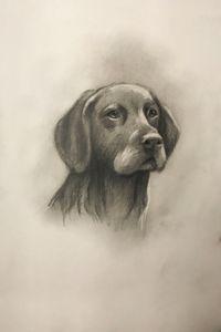 Sketching - Black Labrador Retriever