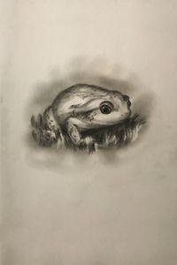 Sketching - Frog
